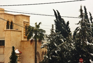 snow-dusted trees & arched windows