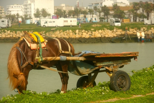 horse by the harbor